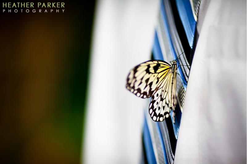 notebaert nature museum wedding by chicago photographer heather parker